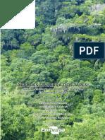 Arvores Da Serra Dos Tapes 1