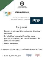 6.Lesion Celular 2017