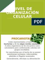 Nivel de organización celular.pptx