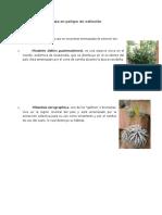 Flora de Guatemala en peligro de extinción.docx
