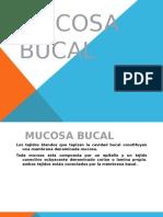 Mucosa Bucal Glándulas Salivales 2016 i