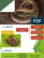 Charla Sobre Serpientes