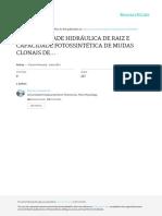 Condutividade Hidraulica de Raiz e Capacidade Fotossintética de Mudas Clonais de Eucalipto Com Indução de Deformações Radiculares