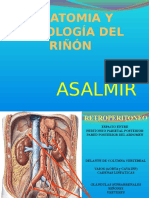 Anatomia y Fisiologia Renal Km