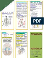 115544313-triptico-sistema-nervioso.docx