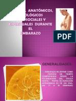 cambiosmorfologicos-111128131315-phpapp02