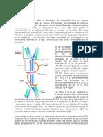 Inmunoglobulina IgA