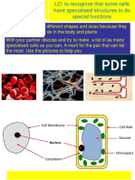5 Specialised Cells