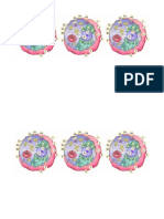 euk cell to label.docx