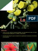 Botanica 6