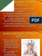Anatomia Funcțională Și Biomecanica a Coloanei Vertebrale Și - Copy
