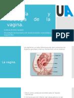 Anatomía y Fisiología Vagina.pptx