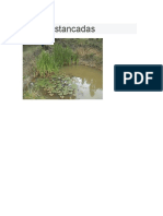 aguas estancadas.docx