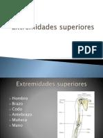 g  extremidades superiores e inferiores