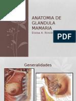 Anatomia de Mama