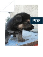 Little dog 2.docx
