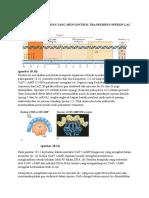 INTERAKSI PROTEIN DNA.docx