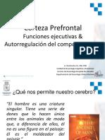 01_prefrontal1
