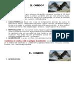 EL CONDOR.docx