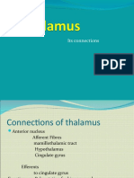 Thalamus and Its Connections