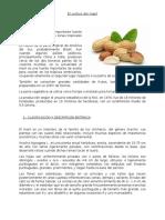 El cultivo del maní.docx