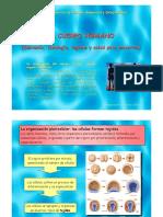 T2-Tejidos.pdf