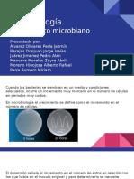 Curva_de Crecimiento Microbiano