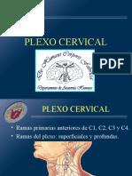 06 Plex o Cervical