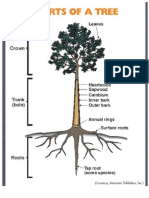 how trees can retain storm water runoff