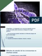 Estudios Citigeneticos