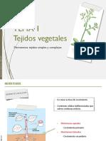 Presentacion Tema 1. Tejidos vegetales