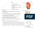 urinary system  review guide
