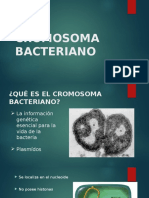 CROMOSOMA BACTERIANO