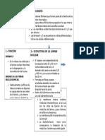 Modificacion Del Organizador Grafico