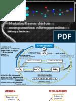 Metabolismo de Compuestos Nitrogenados Pptx