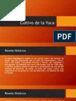 Procesos Del Cultivo de La Yuca