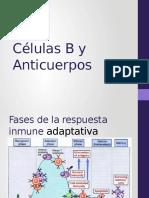 Clase Linfocitos e Inmunoglobulinas