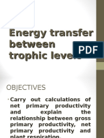 Energy Transfer Between Trophic Levels