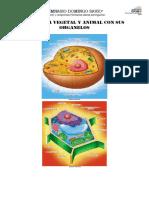 La célula y sus orgánelos.pdf
