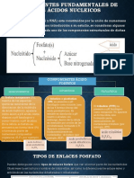 Componentes Fundamentales de Los Ácidos Nucleicos