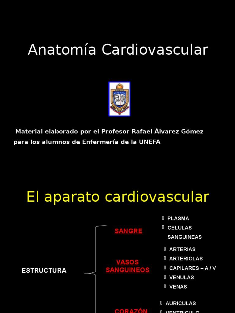 Anatomia Apto Circulatorio - Respiratorio-1