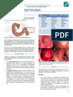 Clase 06 Cirugía - Hemorragia Digestiva Baja