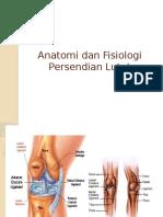 Anatomi Dan Fisiologi Sendi Lutut