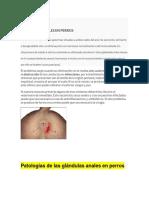 Patologías de Las Glándulas Anales en Perros