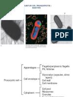 Struktur Sel Prokaryotik Edit