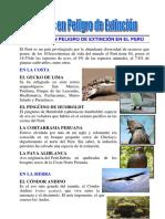 Animales en Peligro Extincion