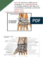 Artrologia Mano