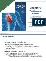 Skeletal Muscle Tissue & Muscle Organization