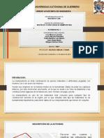Presentacion Actividad 1 Mamposteria 6 Diapo