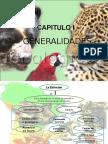 76408180-Animales-Peruano-en-Peligro-de-Extincion.ppt